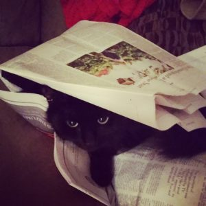 cat-under-newspaper