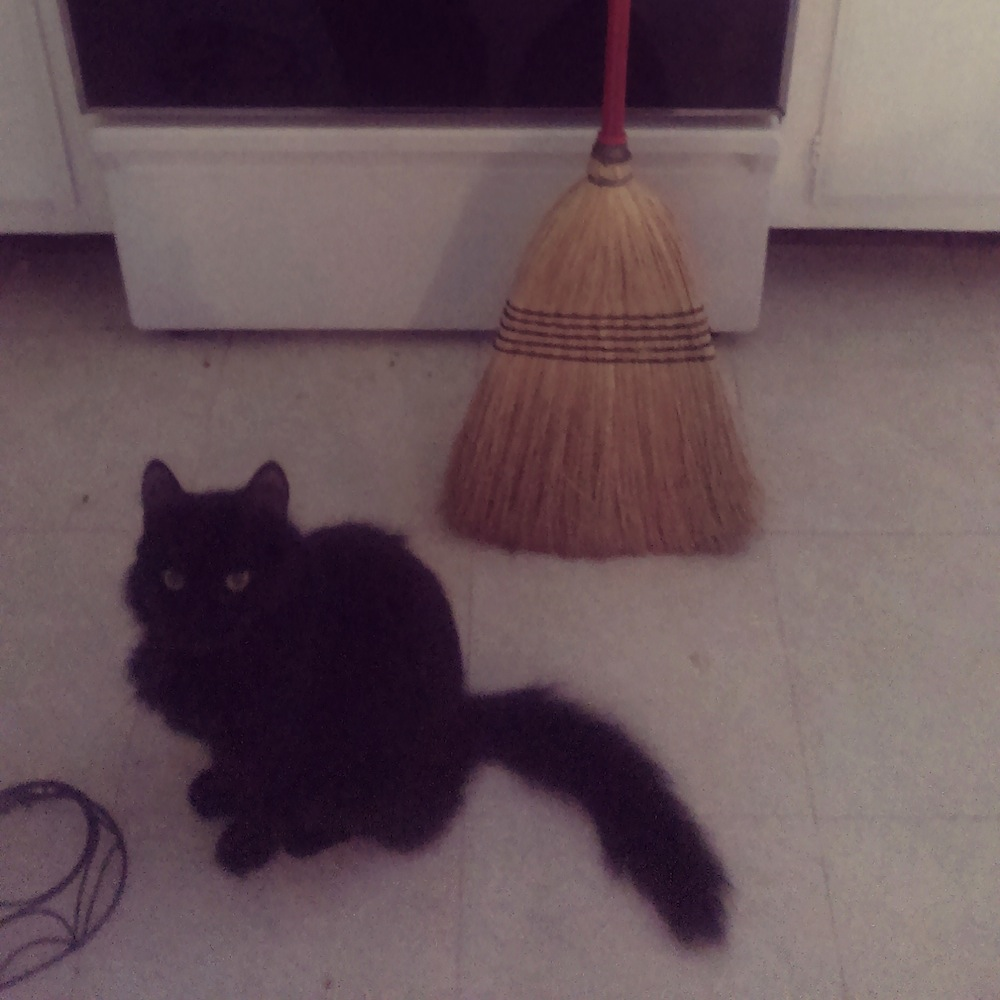 2014.03.08 Cat and broom